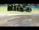 Добродушные омичи спасли от гибели утку с утятами