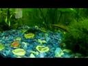 Обзор по рыбкам Аквариум 120 литров