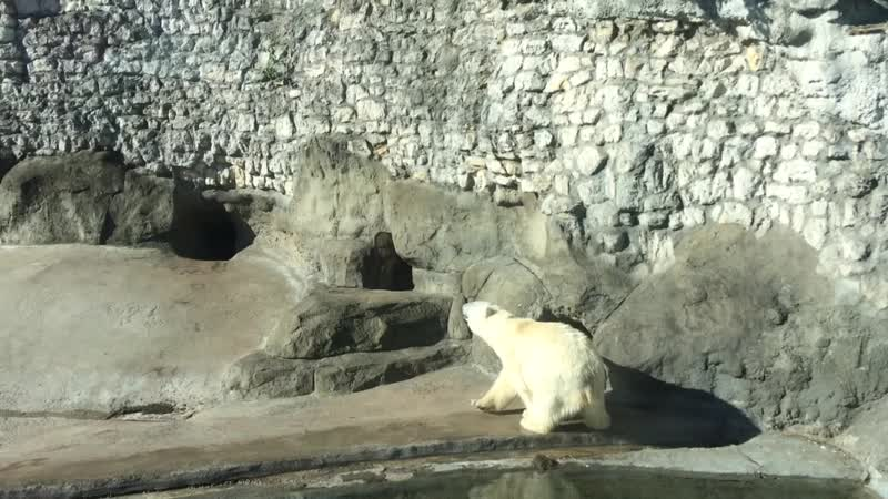 медвежья зарядка