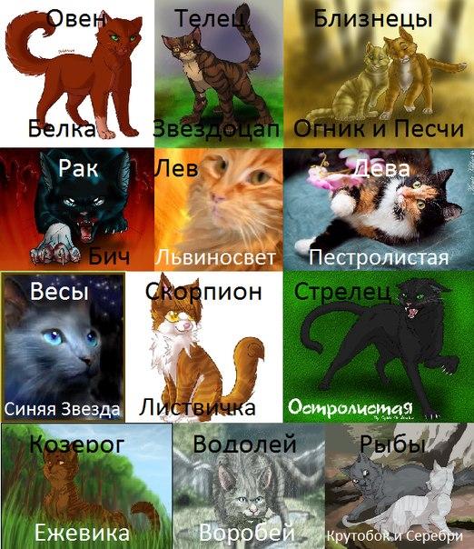 сексуальный гороскоп кота
