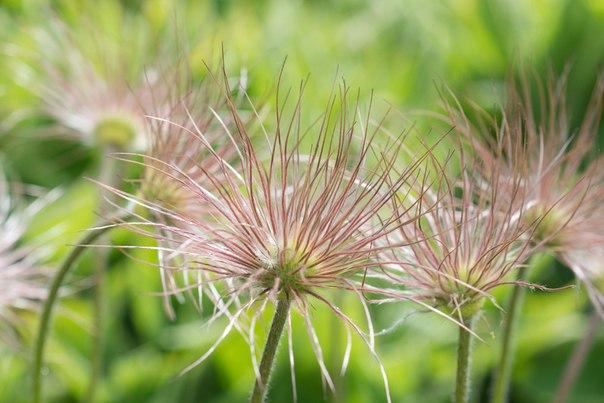 Название цветка? колокольчик