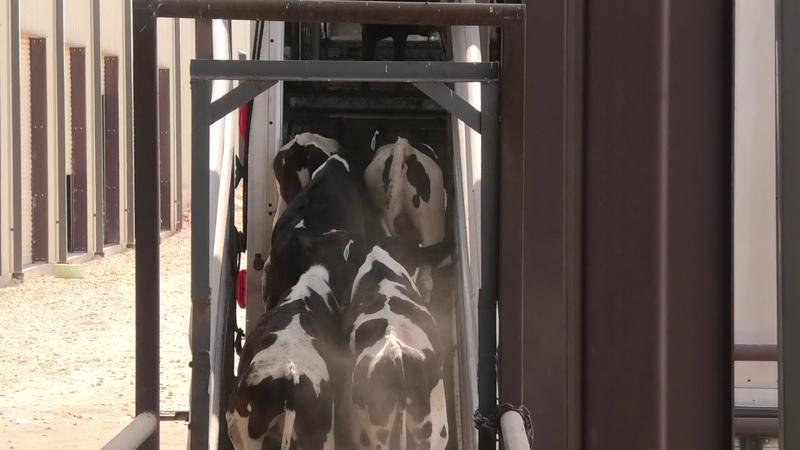 Seale Livestock and Transport
