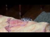 Кот увидел сиськи третьего размера