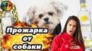 Прожарка от собаки ЧЕЛЛЕНДЖ Русская озвучка Лилли Синг