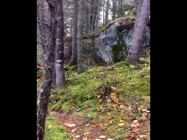 Breathing forest,The ground looks like it's breathing in this Quebec forest.Canada