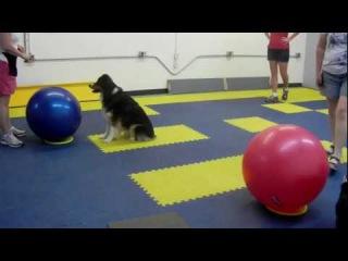 Treibball Class at Superior Dog Training
