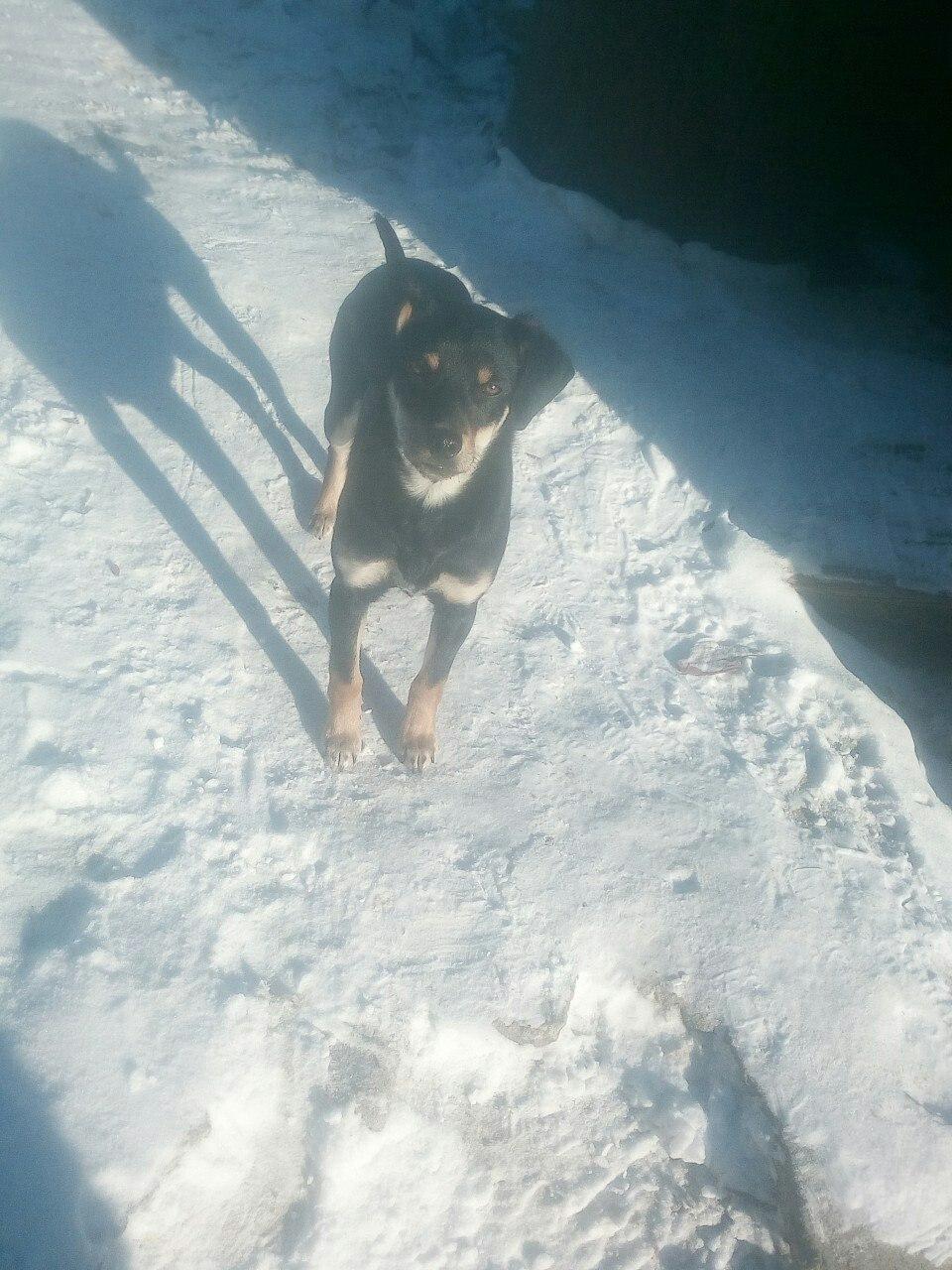 Собака очень умная, лапу падает, домашняя, кто потерял отзовись.