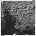 David August альбом 33CHANTS