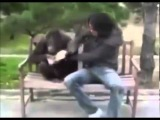 О боже, какой мужчина! прикол с обезьянами) премьера клипа!