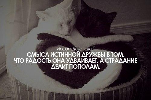http://cs411016.userapi.com/v411016568/6980/KAjlEZM1yLo.jpg