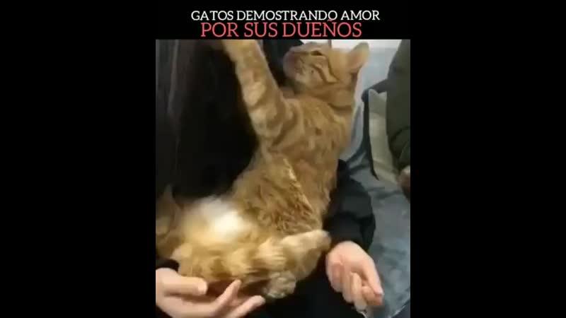 Кошки показывают свою любовь владельцам