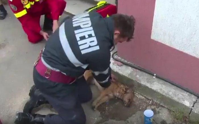Румынский пожарный, ожививший собаку, стал героем Facebook