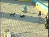 Эвтаназия для собак города Балта!!!