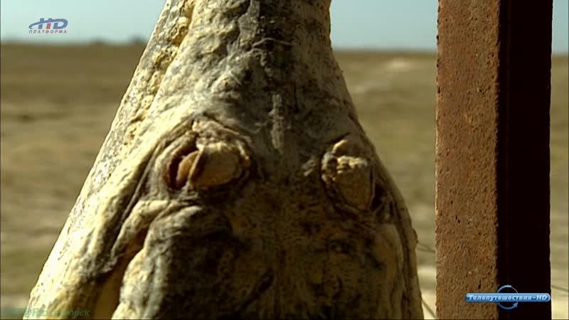 «Крокодилы: Последние драконы» (Познавательный, природа, животные, 2009)