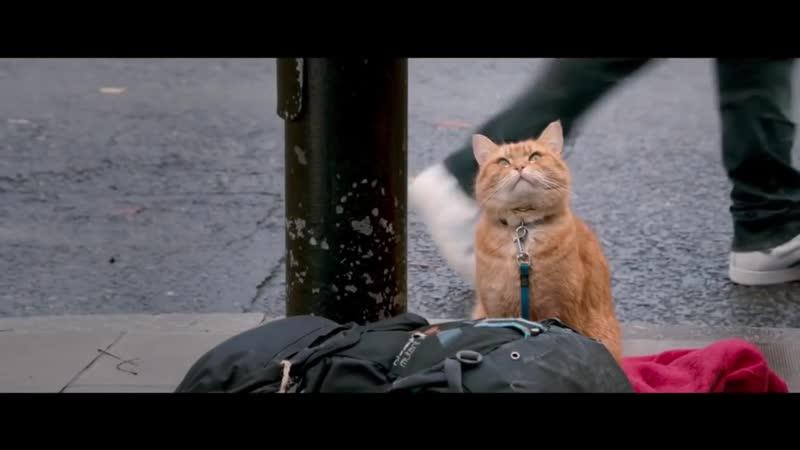 Удивительная история дружбы кота и человека. Фильм Уличный кот по имени Боб Еще один шанс изменить свою жизнь