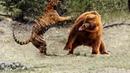 ВЕРСУС Медведь самый грозный хищник планеты Медведь против тигра