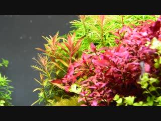 Aquascape: Planted Aquarium with Seiryu