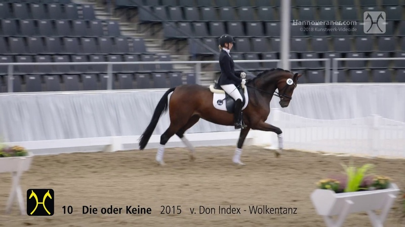 135th Elite-Auction on October 13- Training- No. 10 Die oder Keine by Don Index-Wolkentanz