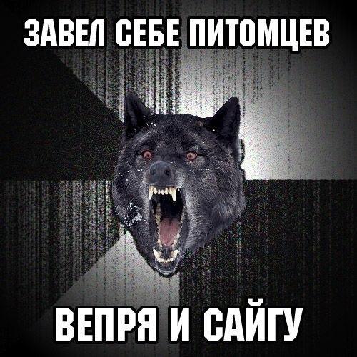 https://pp.vk.me/c618228/v618228478/25596/r9lljqw26KM.jpg