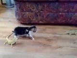 Котёнок и ящерицы
