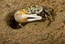 10 животных с несоразмерными частями тела