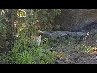 Как мы нашли кота на острове, но поймать не получилось.
