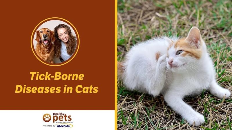 Клещевые заболевания у кошек / Tick-Borne Diseases in Cats