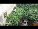 Полторы минуты из жизни анапского кота Персика.