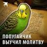 Комсомольская правда on Instagram Волнистый попугайчик пересмешник живущий при Валаамском монастыре молится вместе с людьми Вот такая птичка б