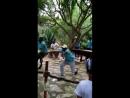 Тунис зоопарк. Танец зулусов