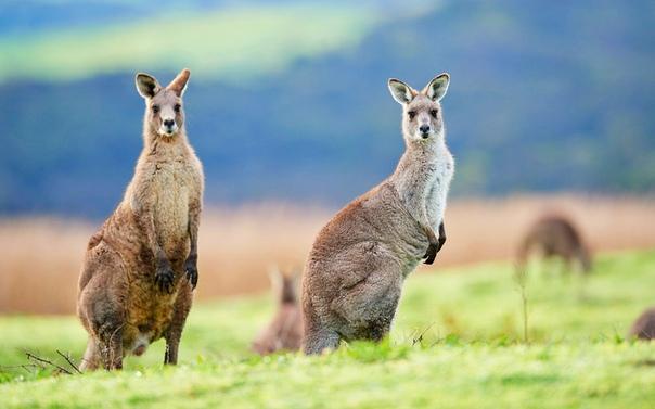 Versace перестали использовать кожу кенгуру в своих коллекциях
