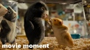 Миссия Дарвина (2009) - Пребывание в зоомагазине (1/10) | movie moment