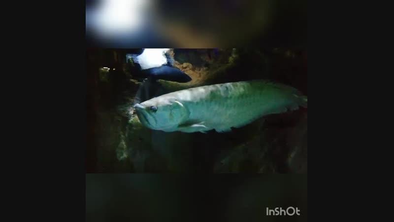 Обитатели океанариума.