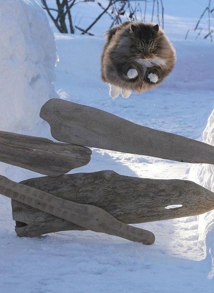 30 котиков, в существование которых сложно поверить ↪ Граициозность этого кота зашкаливает.