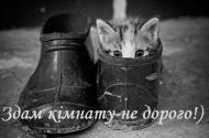кот,котенок,животные,смешно,юмор,позитив,весело,улыбнись,другу,подруге,настроение,привет,приветик.хорошего дня,туфли