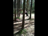 Лесные брусья