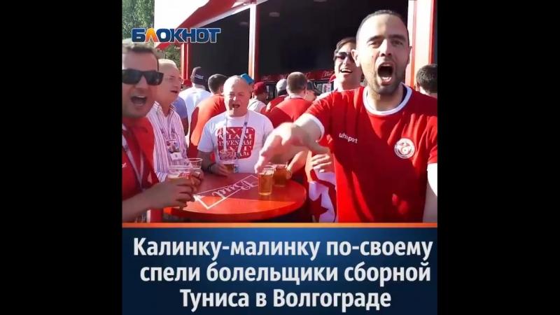 «Калинку-малинку» по-своему спели болельщики сборной Туниса в Волгограде
