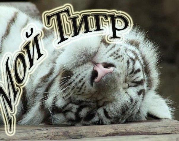 Открытка моему любимому тигру, веночками открытка для