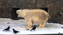 Ленинградский зоопарк. В мире животных 2018