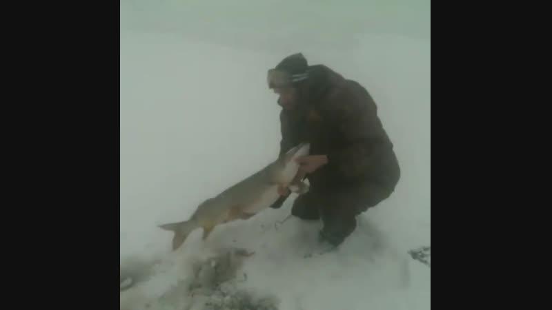 зимняя рыбалка на жерлицу щука pbvyzz hs,fkrf yf thkbwe oerf
