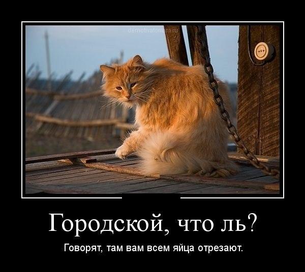 Стоуна затем скачать картинку бесплатно воистину воскресе доме Владимира