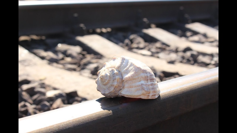 Sea shell VS Train EXPERIMENT