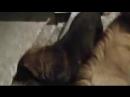 001_хахаха кормит собак пророк сам бой