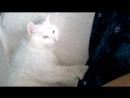 МарсельБелый - Ласковый и добрый кот