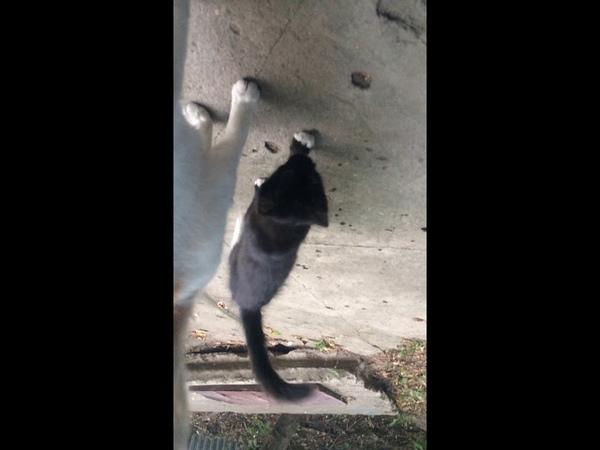 Новая кошка с котятами