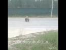 Красят двойную сплошную на ул Петровского в Якутске 17 06 18