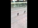 невиданные птицы в Москве