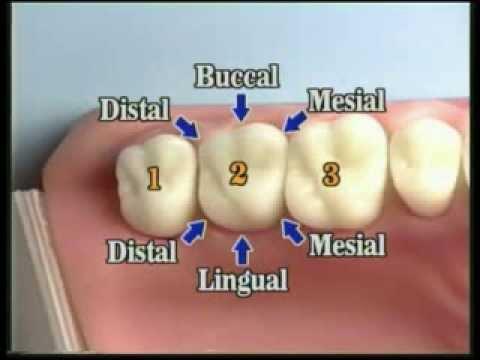 V109 Patient Records Management Dental Charting