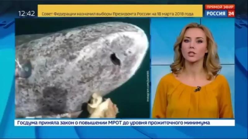 В Атлантике поймали 512-летнюю акулу.