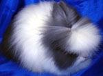 Декоративні-Кролики Івано-Франківськ, 5 февраля 1962, Ивано-Франковск, id177808150